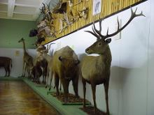 University of Tartu Natural History Museum