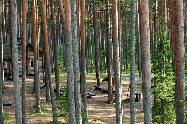Liipsaare forest hut and campfire site