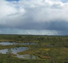 Bog hiking at Kallaste farm