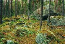 Käsmu's field of boulders