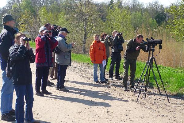 Birdwatching in Audru polder