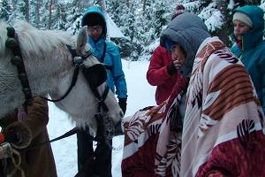 Sleigh ride with Estonian horses from Voore Tallid stables by the Varbola stronghold