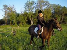 Horse riding trips on the island of Vormsi