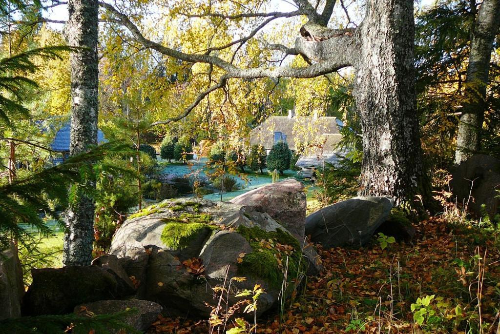 Autumn in Tamme