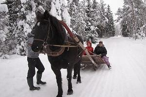 Sleigh rides at Juurimaa in winter