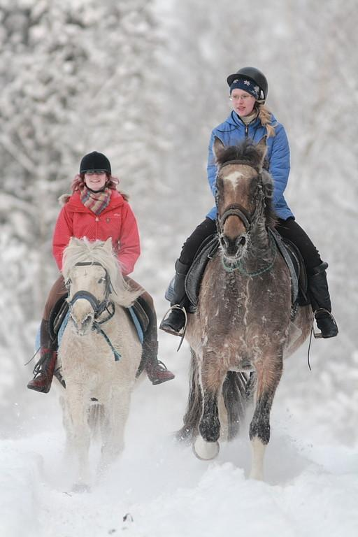 Snow fun with horses