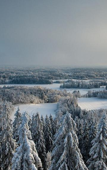 Christmas hike in South-Estonia