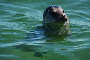 Seal observation trips in Hiiumaa