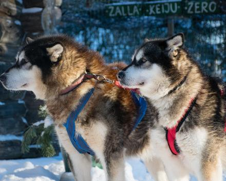 Huskypark – sled dog tourist farm