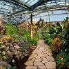 Tallinns Botaniska trdgrd