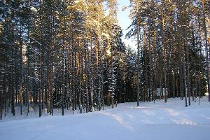 Pullijärve Holiday Village Exercise Trail
