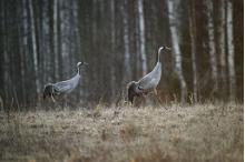 Migratory bird routes: Estonia, a bird-watcher's paradise