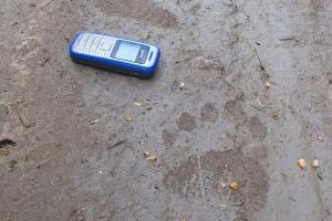 Brown Bear track in Estonia