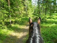Horseback trips at Kalaoja Farm
