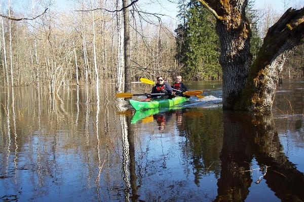 Kayaking on the flooded area in the Soomaa National Park