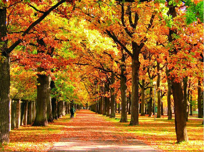 Real life combines smoothly with a virtual life in autumn