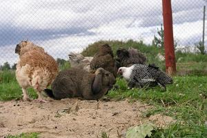 Other animals and a rabbit from Sassi Ostrich Farm