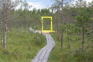 Yellow National Geographic window in the Valgesoo bog
