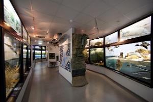 Estonian Museum of Natural History