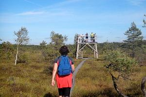 Hiking on the Riisa trail; the boardwalk takes you straight to the tower