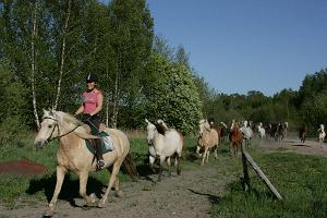 Tihuse horse-riding & tourism farm