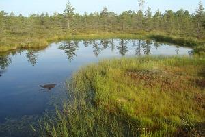 A small bog pool in Udriku swamp
