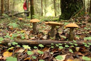 Soomaa.com mushrooming trips