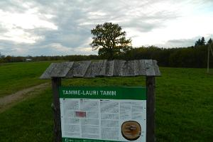 Tamme-Laurin tammi