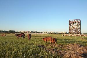 Pärnu Coastal Meadow Nature Reserve, observation tower, and cows