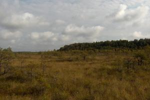 North-western corner of Virussaare from a distance