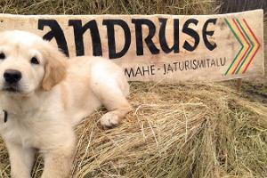 Andruse organic and tourism farm