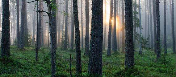 The story of Estonian forest