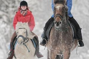 Fun in the snow with horses