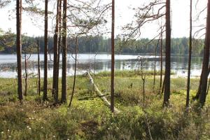 `Mustjärv` lake in Nohipalu