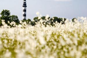 Discover Osmussaar - the most beautiful moments of the summer in the middle of Estonian nature