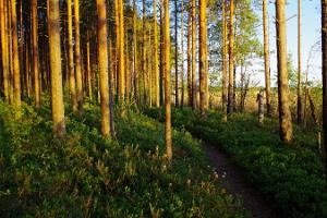 Nature tour: from Tallinn to Tartu through Kõrvemaa forests