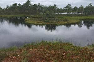 "One Day Nature Tour  ""North-West Estonian Wilderness"""