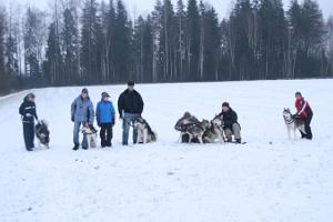 Dogsledding with the Mutimuudi Sled Dogs