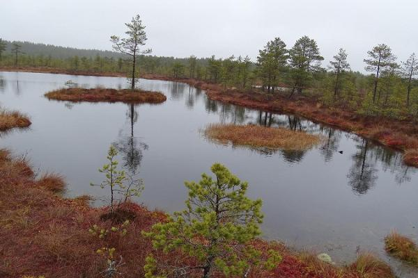 Hiking in Viru bog