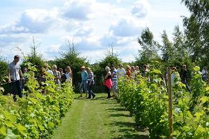 Cider tour in Tori Jõesuu Cider and Wine Farm at the edge of Soomaa