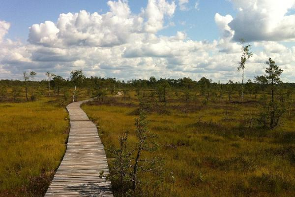 Hike in Tolkuse bog with Nurka Farm