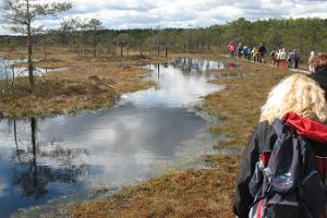 Day trip: Viru bog and an Estonian sauna experience