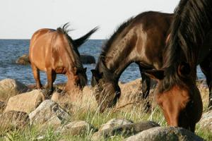 Horses at Arma Equestrian Farm
