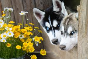 Come and learn about the rural life and Huskypark, a sled dog tourist farm!