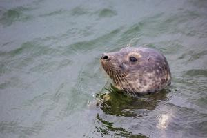 Seal-watching trips for groups on the islands of Kolga Bay