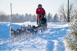 Sleigh ride with Siberian Huskies