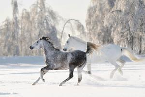 Voore stable sleigh and sled rides in Rapla County or a place of your choice