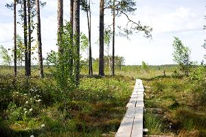 Kotka hiking trail