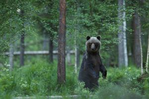 New Alutaguse Brown Bear and Wildlife Observation Hide