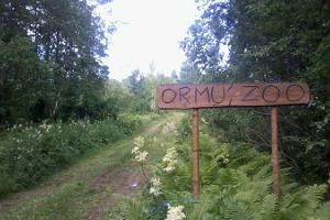 Brown bear observation at Ormu Zoo